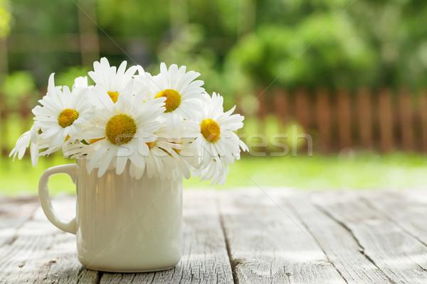 Daisy manzanilla flores jardín mesa Foto stock © karandaev