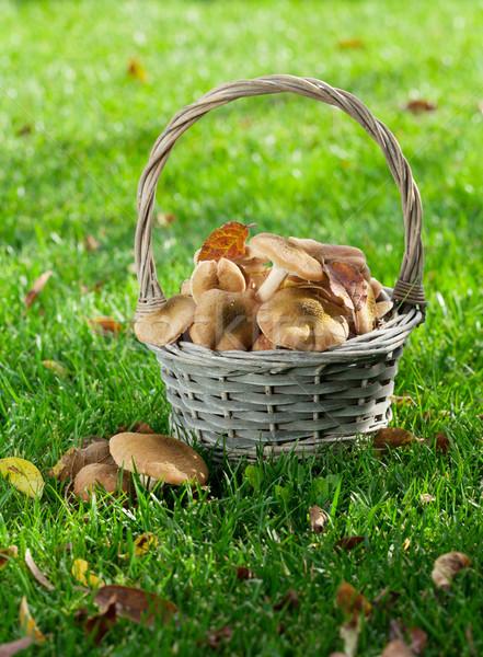 ストックフォト: 秋 · キノコ · バスケット · 草 · 草原 · 木材