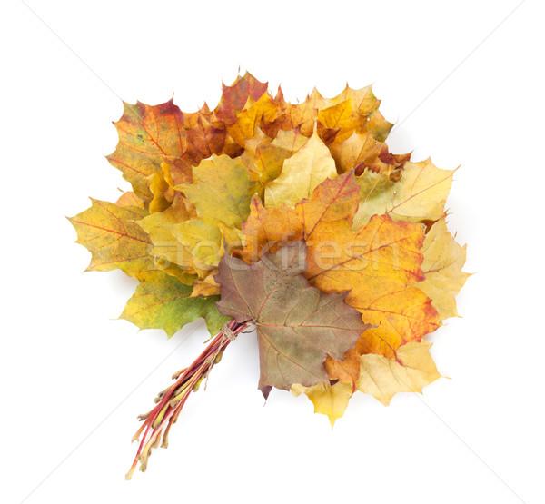 Színes ősz juhar levelek köteg izolált Stock fotó © karandaev