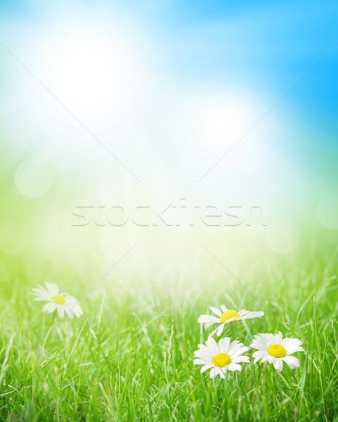 ромашка цветы травой поле Солнечный лет день Сток-фото © karandaev