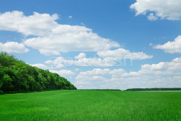 Vidék mező erdő napos nyár tájkép Stock fotó © karandaev