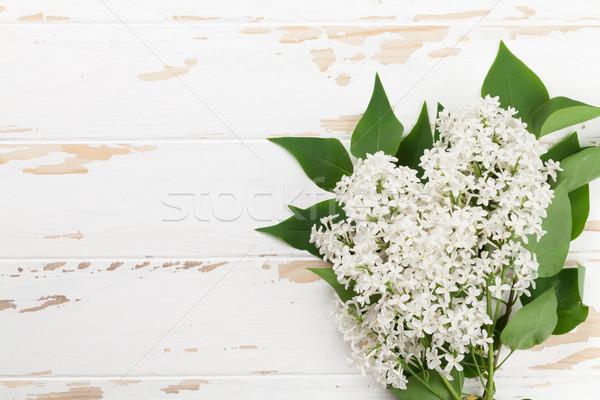 White lilac flowers Stock photo © karandaev