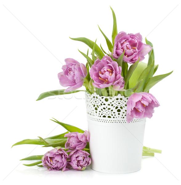 Pink tulips Stock photo © karandaev