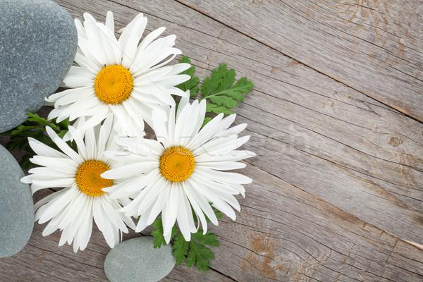 Daisy camomilla fiore mare pietre fiori Foto d'archivio © karandaev