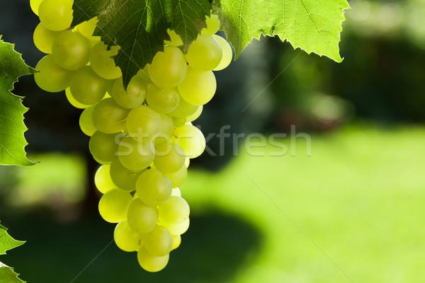 Vite bianco uve giardino foglia Foto d'archivio © karandaev