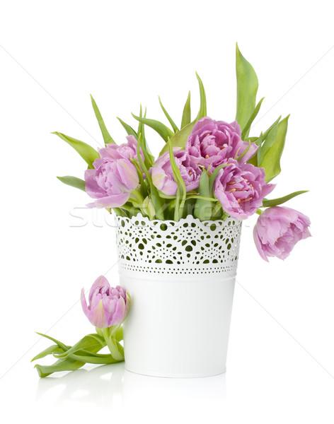 Roz lalele metal ghiveci de flori izolat alb Imagine de stoc © karandaev