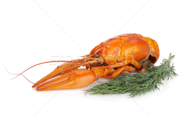 Boiled crayfishes with dill Stock photo © karandaev