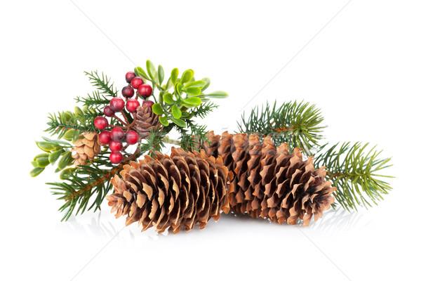 Christmas tree branch with holly decor Stock photo © karandaev