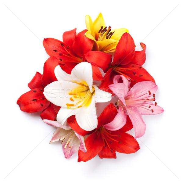 Colorful lily flowers Stock photo © karandaev