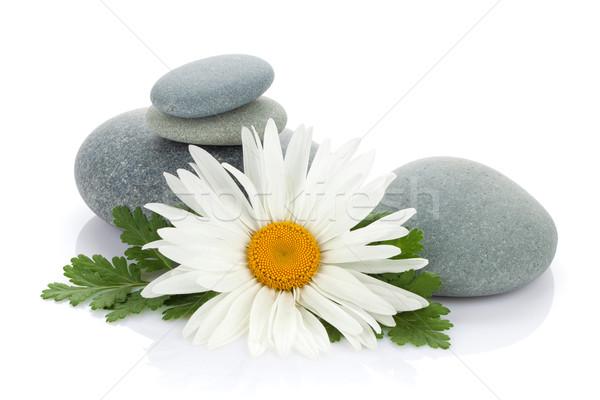 Zdjęcia stock: Daisy · rumianek · kwiat · morza · kamienie · odizolowany