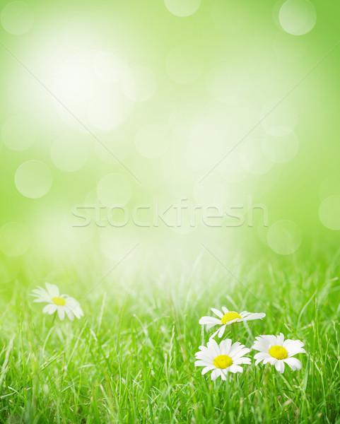 Camomille fleurs champ d'herbe ensoleillée été jour Photo stock © karandaev