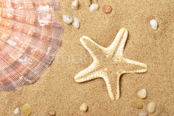 Cockleshells and a starfish lie on seacoast  Stock photo © karandaev
