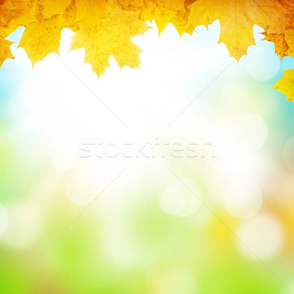 Autumn background with maple leaves Stock photo © karandaev