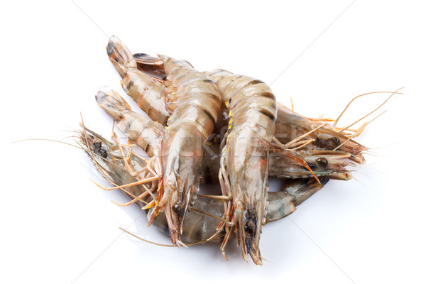 Fresh raw tiger prawns Stock photo © karandaev