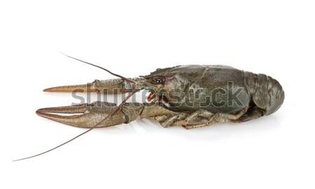 Isolé blanche main poissons rivière manger Photo stock © karandaev