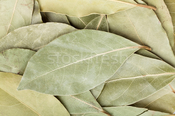 Aromatic bay leaves Stock photo © karandaev