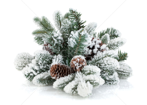 Fir tree branch with cones covered with snow Stock photo © karandaev