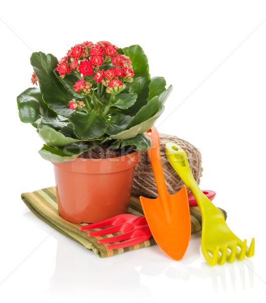 Potted flower and garden utensils Stock photo © karandaev