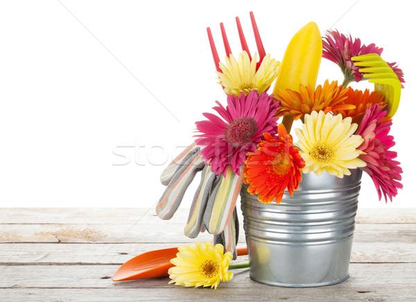 Photo stock: Coloré · fleurs · jardin · outils · table · en · bois · isolé