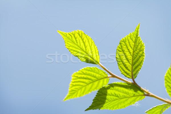 Abstract zonnige zomer groene bladeren bos natuur Stockfoto © karandaev