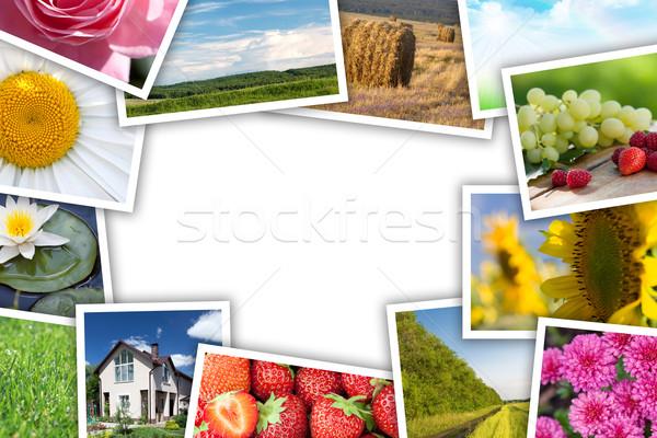 Impresso fotos colagem cópia espaço texto Foto stock © karandaev