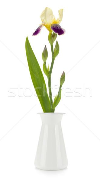 Odizolowany biały kwiat charakter ogród Zdjęcia stock © karandaev