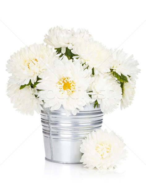 White aster flowers Stock photo © karandaev