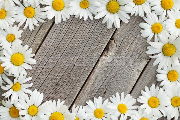 Daisy camomilla fiori legno frame legno Foto d'archivio © karandaev