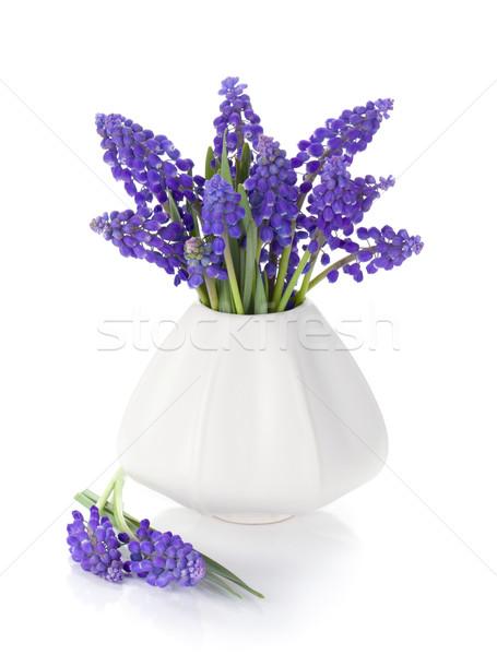 Foto stock: Azul · jacinto · flores · vaso · isolado · branco