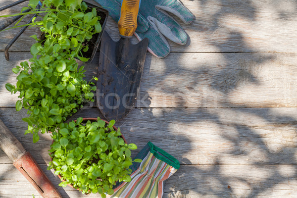 Gardening tools and seedling on garden table Stock photo © karandaev