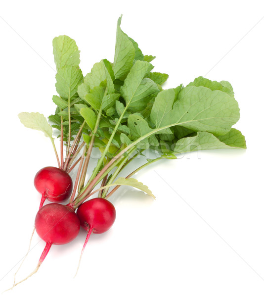 Fresh radish Stock photo © karandaev