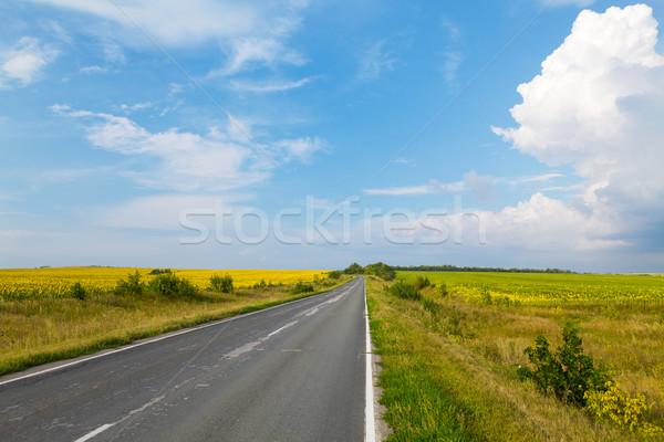 道路 黄色 ヒマワリ フィールド 空 ストックフォト © karandaev