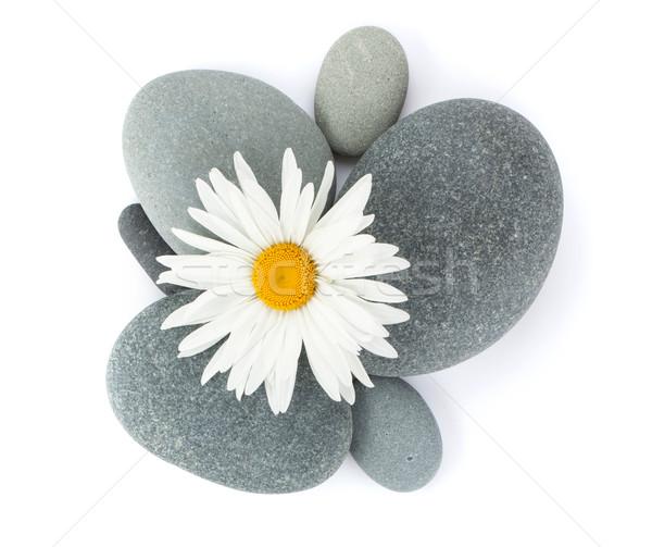 Daisy rumianek kwiat morza kamienie odizolowany Zdjęcia stock © karandaev