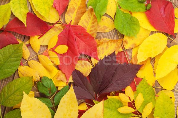 Autumn leaves over wood background Stock photo © karandaev