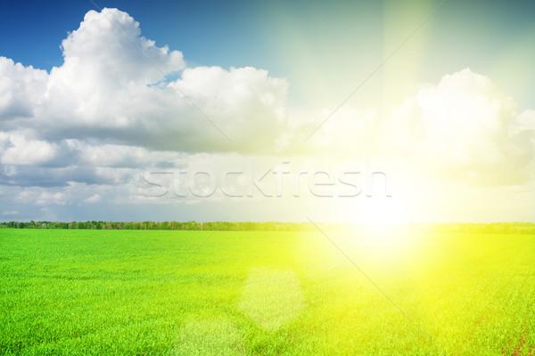 Groen gras veld blauwe hemel wolken horizon hemel Stockfoto © karandaev
