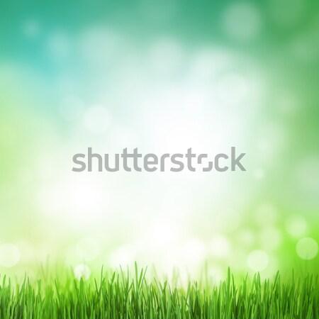 Absztrakt napos nyár fű bokeh textúra Stock fotó © karandaev