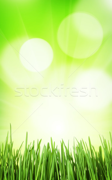 Солнечный весны трава bokeh аннотация Пасху Сток-фото © karandaev