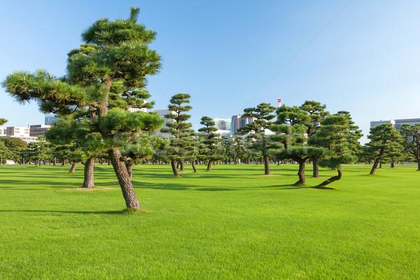 Pine trees park in Tokio Stock photo © karandaev