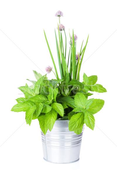 ストックフォト: 新鮮な · 庭園 · ハーブ · 孤立した · 白 · 春