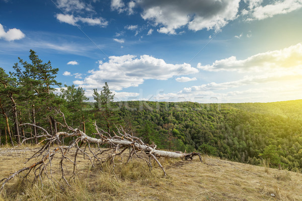 Countryside landscape with mountain forest Stock photo © karandaev
