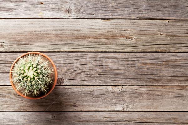 Cactus plant in flower pot  Stock photo © karandaev