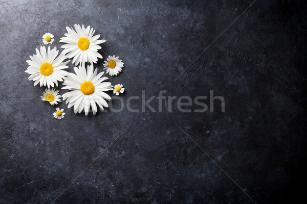 Jardin camomille fleurs pierre table fond Photo stock © karandaev