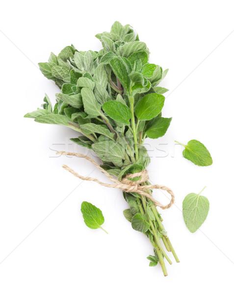 Fresh garden oregano herb Stock photo © karandaev
