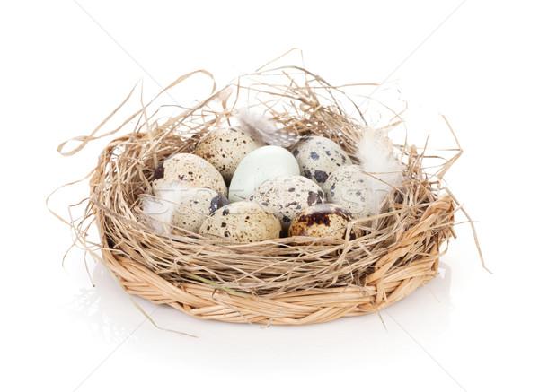 Quail eggs nest Stock photo © karandaev