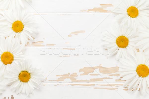 Garten Kamille Blumen Holz top Ansicht Stock foto © karandaev