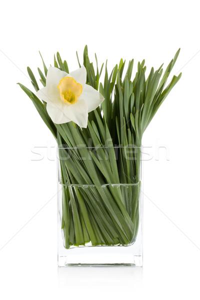 белый Daffodil стекла ваза изолированный весны Сток-фото © karandaev