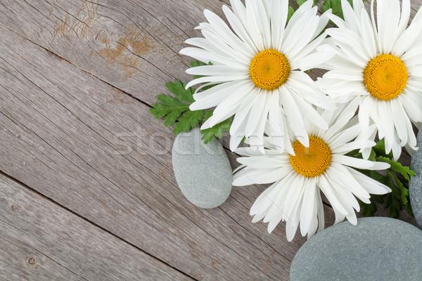 Daisy ромашка цветы морем камней деревянный стол Сток-фото © karandaev