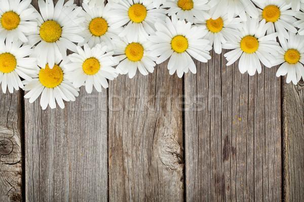 Daisy ромашка цветы древесины саду Сток-фото © karandaev