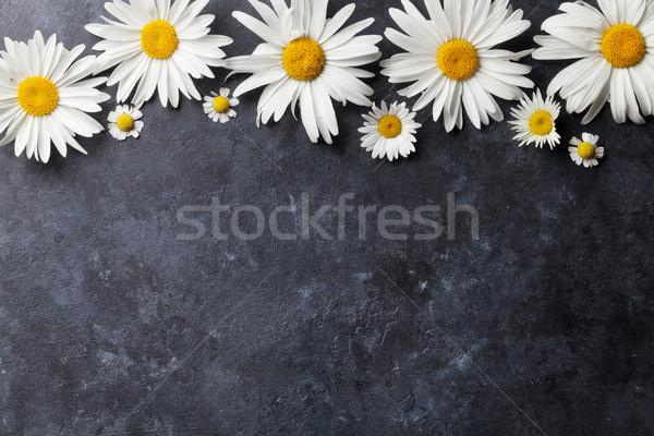 Jardim camomila flores pedra tabela fundo Foto stock © karandaev