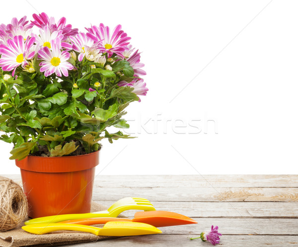 Photo stock: Jardin · de · fleurs · outils · isolé · blanche · fleurs · bois